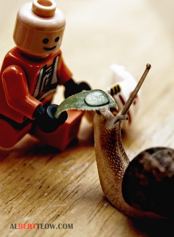 Canon Photo 5 2010 Entry:Eyedropper - Lego Man & Snail