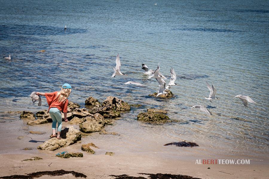 _MG_8673-Girl_Chasing_Seagulls