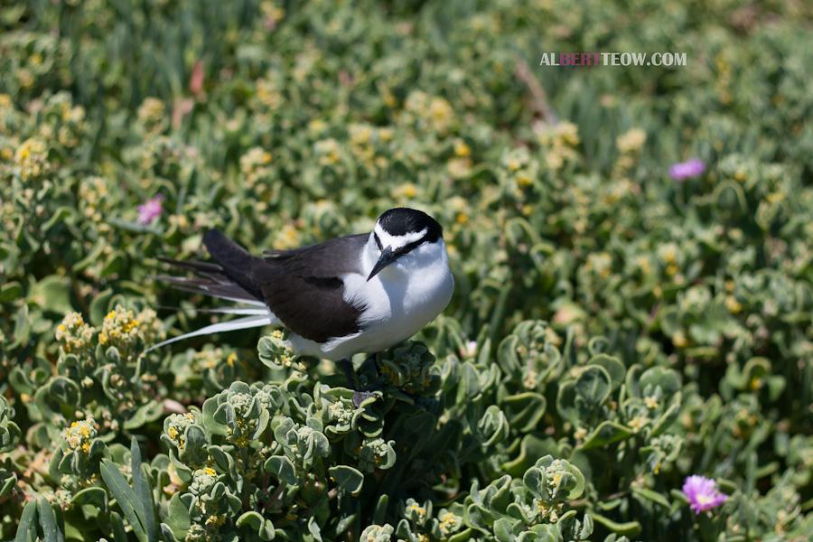 _MG_8800-Bird_in_Bush